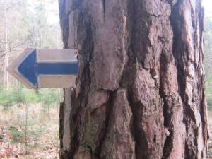 Blue-arrow-sign-Czech
