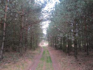 Camino Santiago forest walk