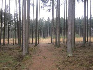 Czech-Republic-country-path