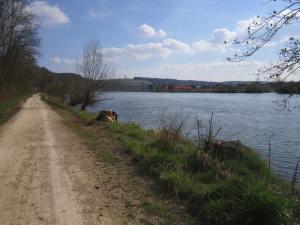 The Danube river Regensburg