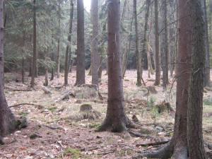 Czech Republic mountain forest