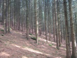 Bavarian steep forest