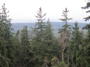 Trensim woodland