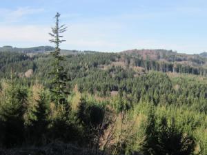 Sumava mountain forest walk