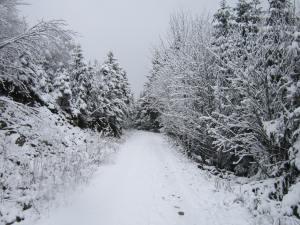 Snow path near Neukirchen