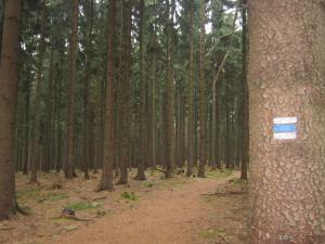 Czech Republic forest