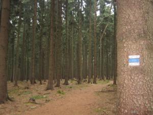 Czech Republic forest