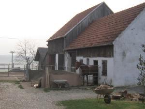 Bavarian horses