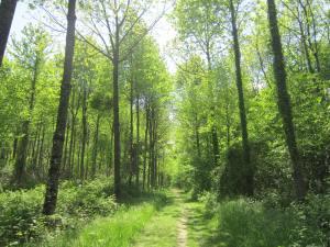 Camino-France-3