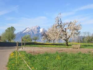 More paradise on Lake Lucerne