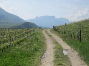 Savoie-vineyards