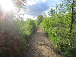 Camino-path-to-Cahors