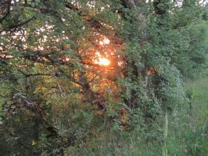 Camino-sunset