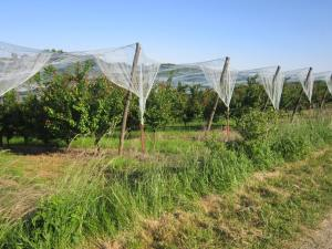 French-fruit-growing