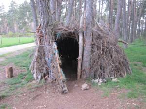 Camino wood