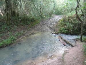 Waterlogged GR65