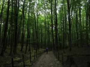Navarra-Forest
