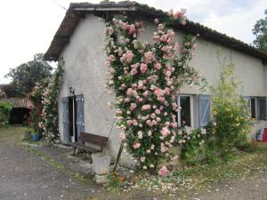 Roses-on-the-Camino