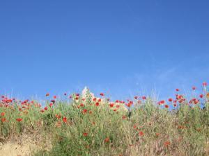 Castrojeriz-field