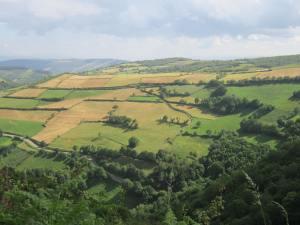 Galicia-Devon