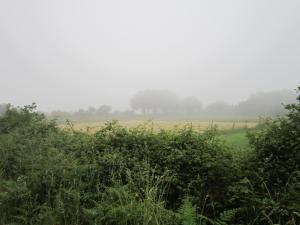 Galicia-morning-mist