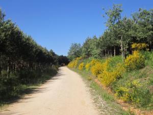 Walk-out-of-Villafranca-2