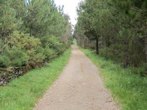 Way-from-Olveiroa-3