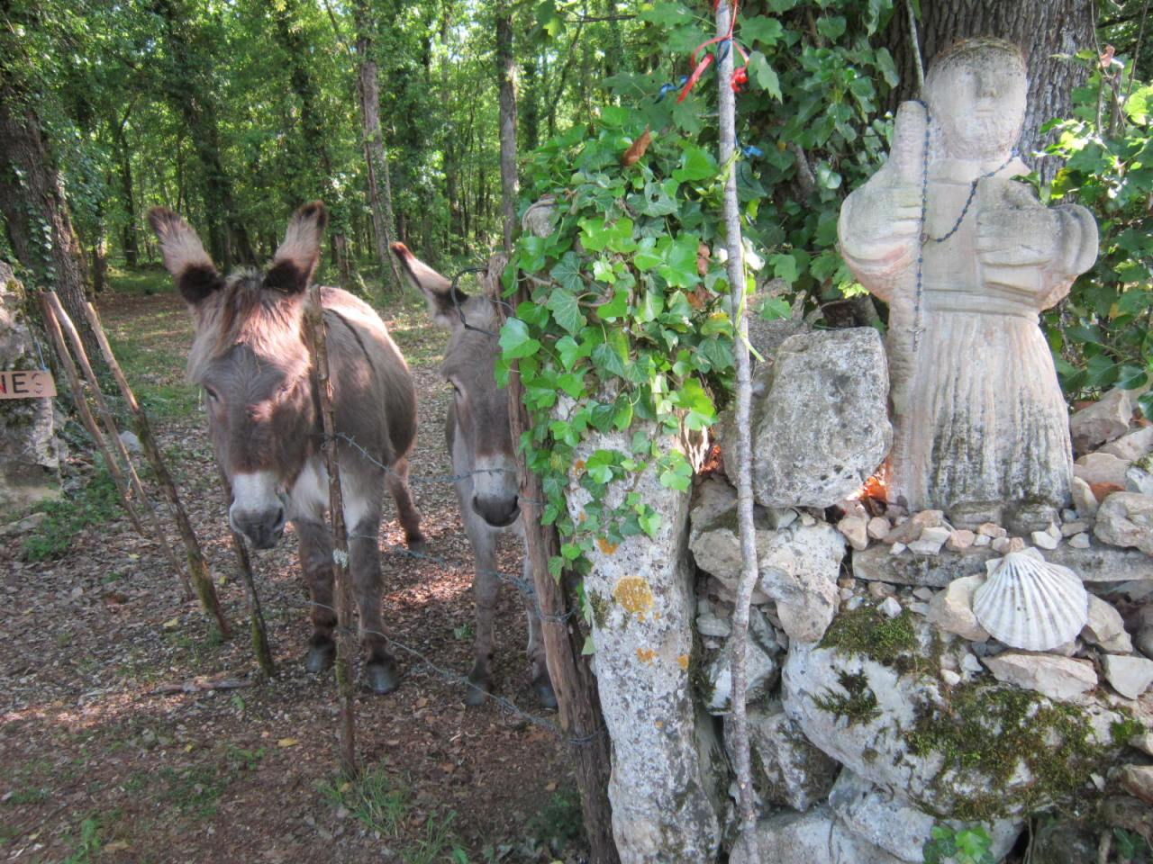 Donkeys on Le Puy Way in France