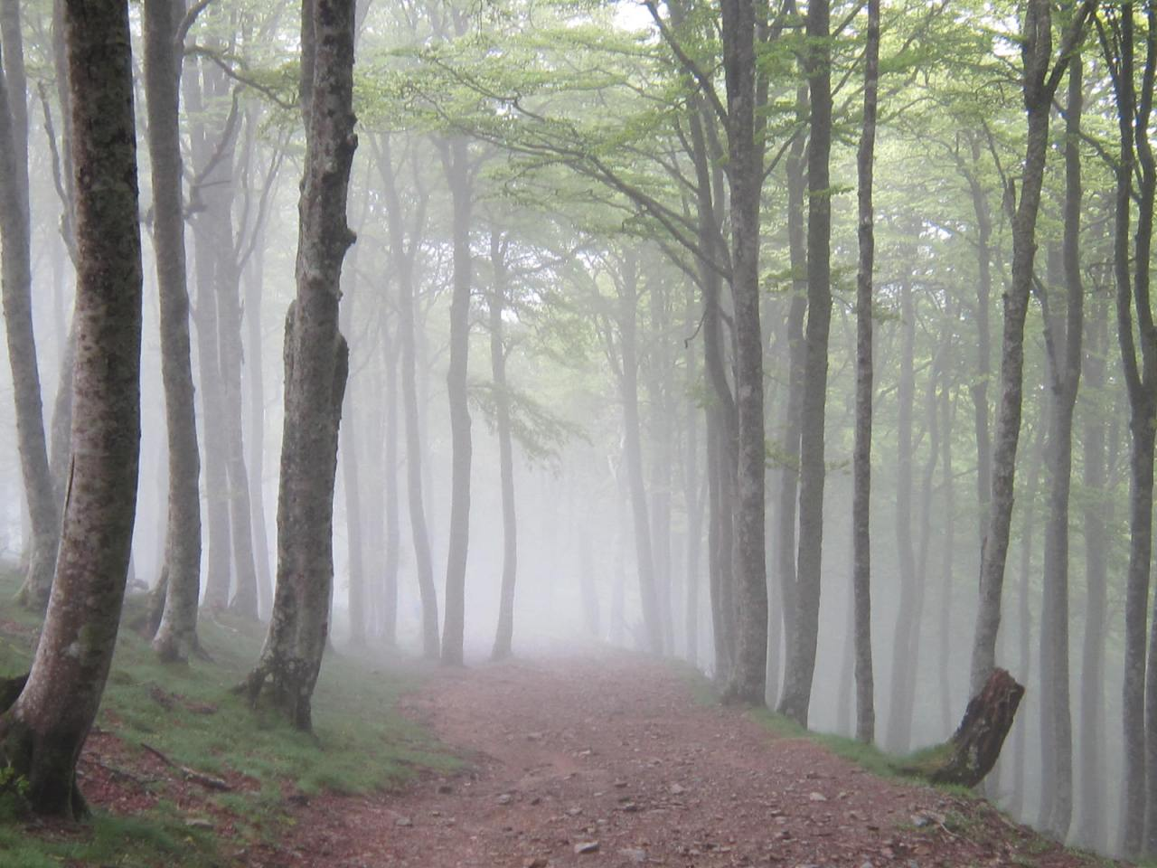 Walking through the enchanted forest in the Pyrenees between St. Jean Pied de Port andRoncesvalles